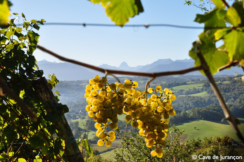 432_Cave_Gan_Jurancon_Montage vigne + pic