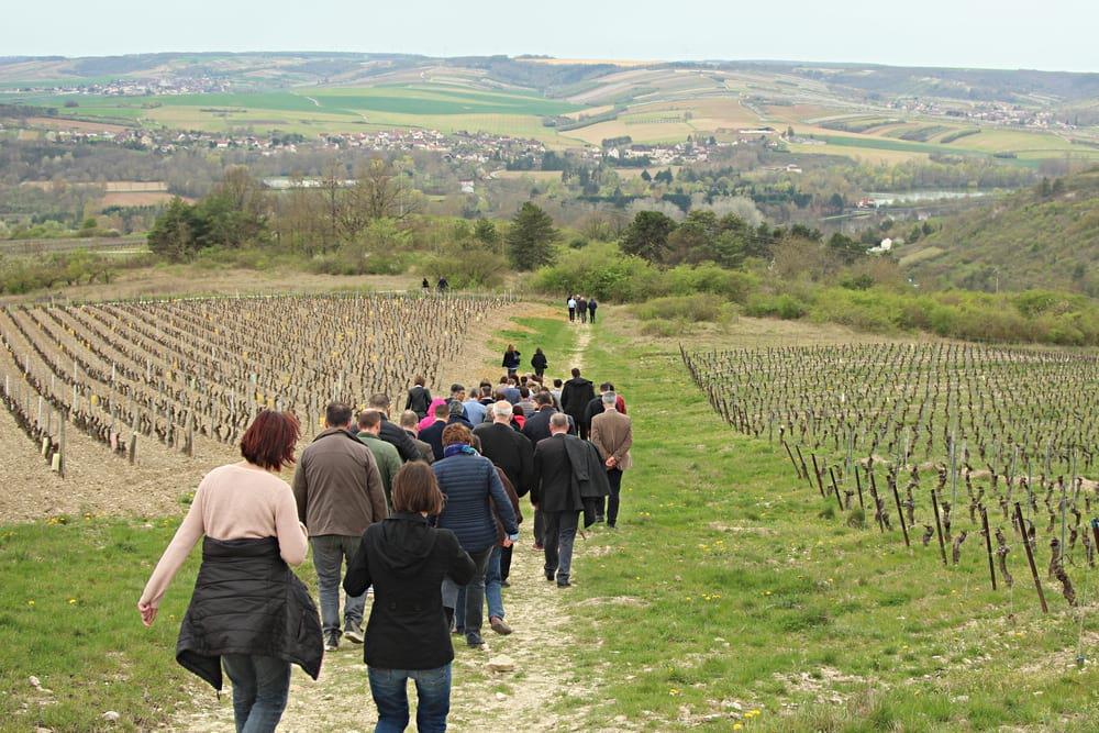 Entreprise_et_Decouverte_Caves_de_Bailly_Lapierre_visite_vigne.2