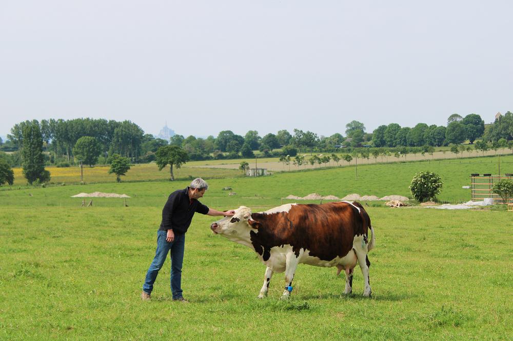 4. Vache – Ferme des Cara-Meuh – Vains – crédit photo Cara-Meuh.2