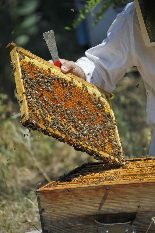 cadre-de-ruche-photo-c-pedrotti-2
