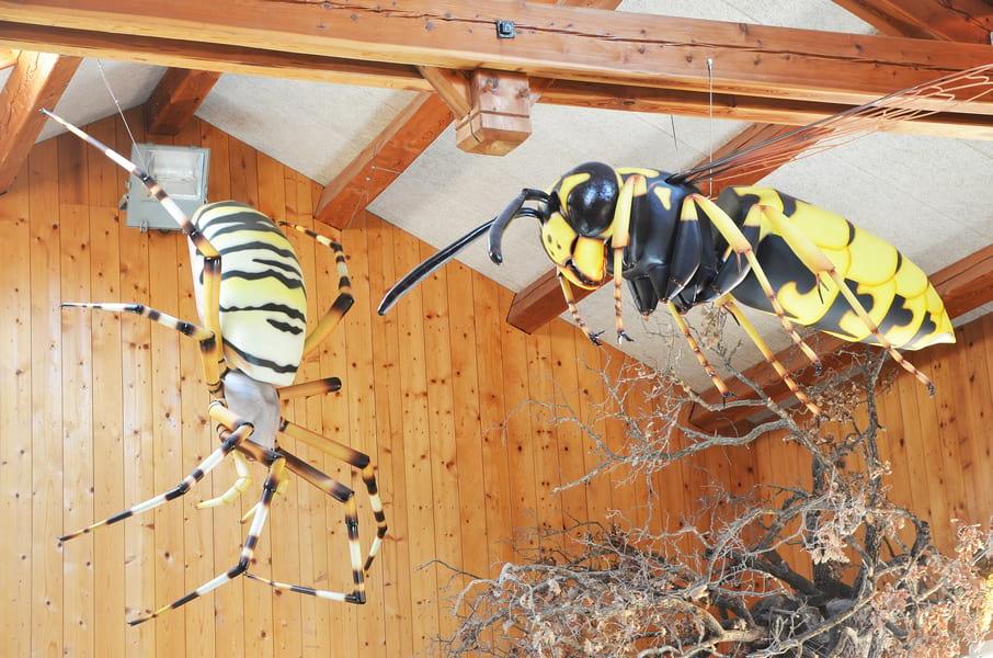 insectes-geants-apiland-photo-c-tardieu-2