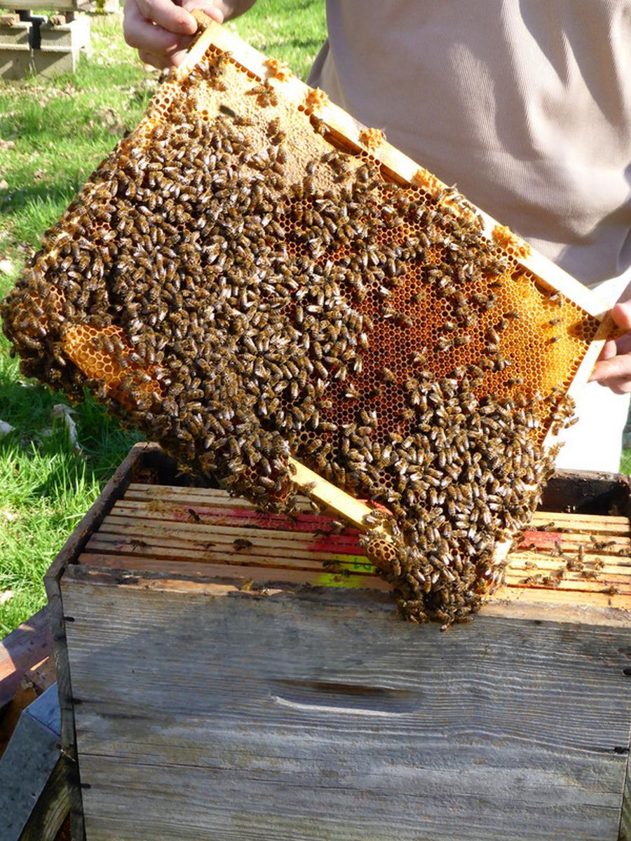 la-ruche-de-mary-4