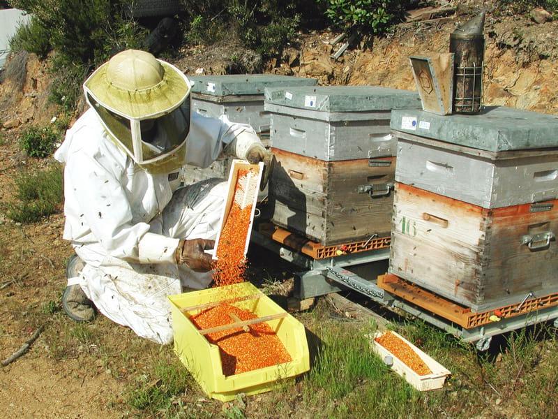 recolte-pollen-de-feurs-photo-apiland-2